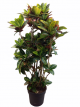 Plants_Mixed_-_Branched